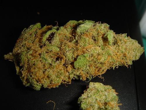 mr-nice-marijuana-strain-3